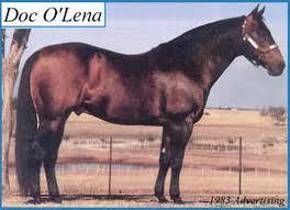 DOC OLENA